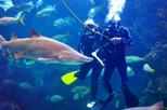 Save 13% Off Dive with the Sharks at The Florida Aquarium in Tampa Bay