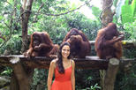 Save 4% Off Singapore Zoo Breakfast with Orangutans.