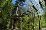 Save 10% Off High Ropes Adventure Park Admission in Interlaken.