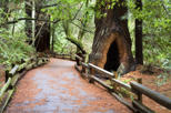 Save 18% Off San Francisco Super Saver: Muir Woods and Wine Country Tour.
