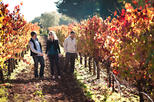 Save 10%: Best Vine to Wine Napa and Sonoma Day Trip with Tastings and Organic Winery Tour