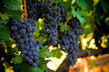 Save 14% Off Napa and Sonoma Wine Country Tour.