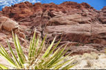 Save 11% Off Red Rock Canyon Tour