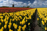 Save 15% Off Dutch Windmills and Countryside Day Trip from Amsterdam Including Cheese Tasting in Edam