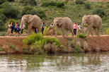 Save 10%! 2-Day South African Wildlife Safari Guided Tour from Cape Town