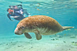 Save 5%! Crystal River Manatee Snorkeling and Everglades Airboat Tour!