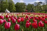 Save 8%! Amsterdam Shore Excursion: Keukenhof Gardens and Tulips Fields Tour