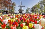 Save 8%! Keukenhof Gardens and Tulip Fields Tour from Amsterdam