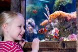 Save 23%! SEA LIFE Aquarium Minnesota Admission Tickets at the Mall of America