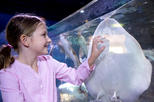 Save 20%! SEA LIFE Michigan Aquarium Admission Ticket