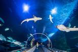 Save 29%! Aquarium of the Bay General Admission
